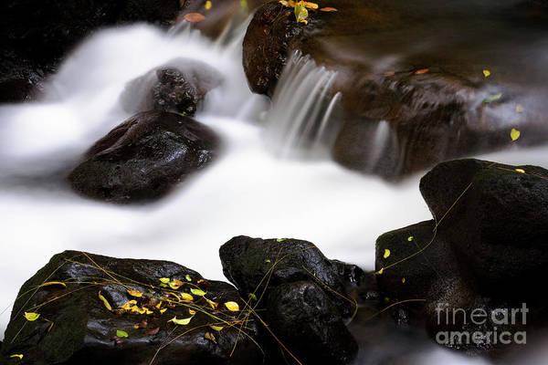 Photograph - Nuuanu Stream I by Charmian Vistaunet