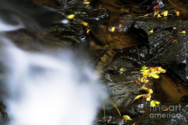 Photograph - Nuuanu Stream II by Charmian Vistaunet