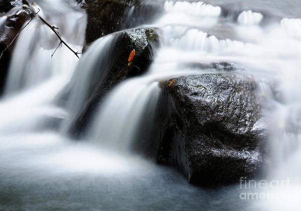 Photograph - Nuuanu Stream Iv by Charmian Vistaunet