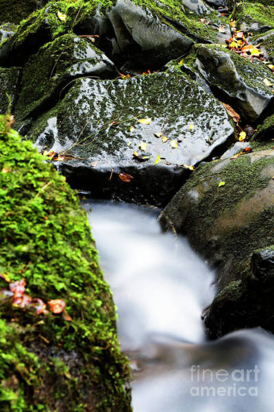 Photograph - Nuuanu Stream V by Charmian Vistaunet