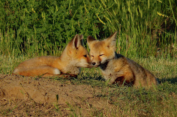 Photograph - Nuzzle Buddies by Frank Vargo