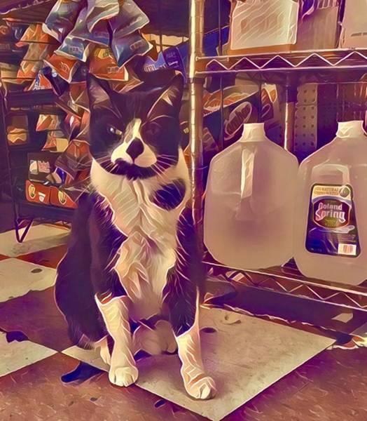 Nyc Digital Art - Nyc Bodega Cat by Gina Callaghan