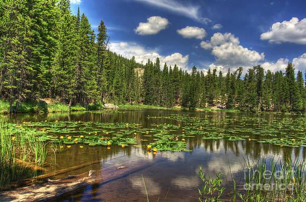 Photograph - Nymph Lake 2 by Pete Hellmann