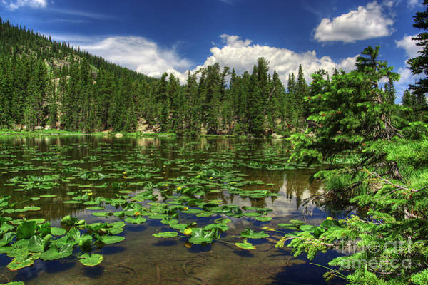 Photograph - Nymph Lake by Pete Hellmann