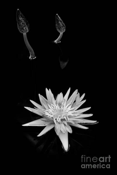 Wall Art - Photograph - Nymphaea Foxfire by Tim Gainey