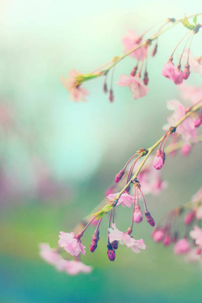 Wall Art - Photograph - Blossom Breeze  by Jessica Jenney
