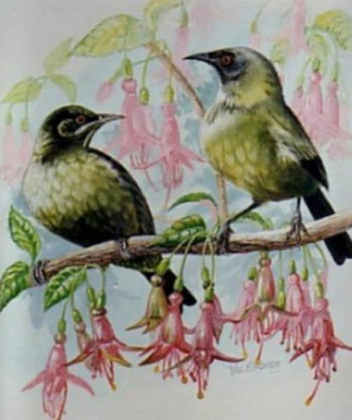 Painting - Nz Bellbirds by Val Stokes