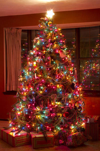 Photograph - O Christmast Tree by James BO Insogna