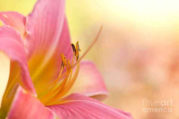 Photograph - O That Summer Passion by Beve Brown-Clark Photography