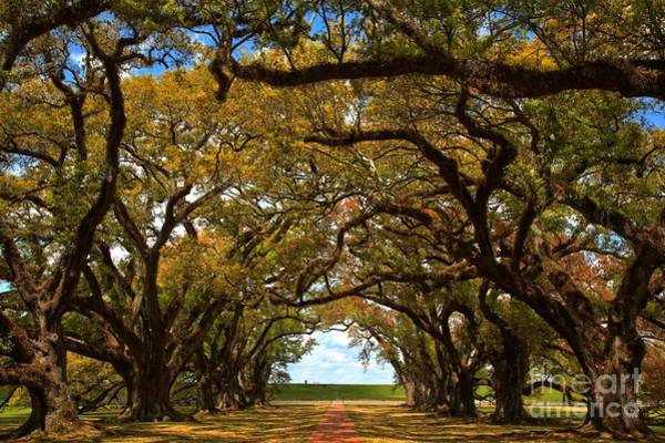 Photograph - Oak Alley Avenue Of The Oaks by Adam Jewell