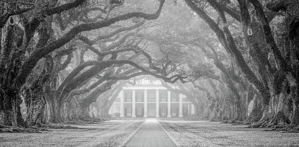 Photograph - Oak Alley Fog by Andy Crawford