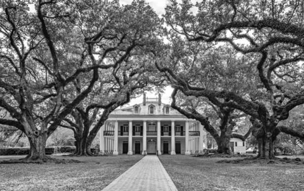 Greek Revival Architecture Photograph - Oak Alley Mansion - Bw by Steve Harrington