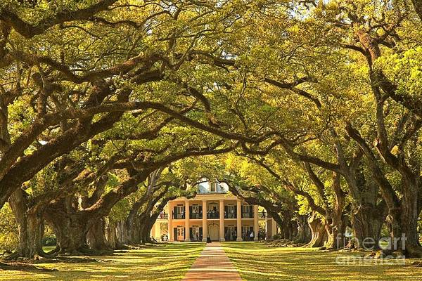 Photograph - Oak Alley Plantation House by Adam Jewell