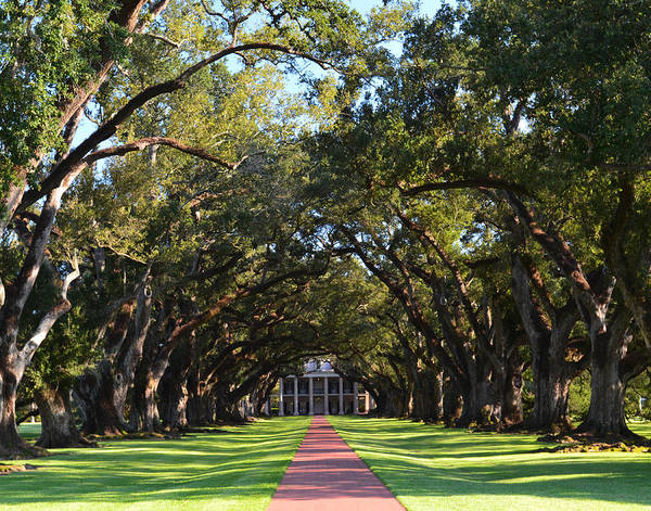 Photograph - Oak Alley Plantation by Maggy Marsh