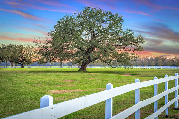 Photograph - Oak Alley Signature Tree At Sunset by Andy Crawford