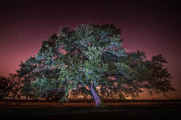 Photograph - Oak Alley Signature Tree Under The Stars by Andy Crawford