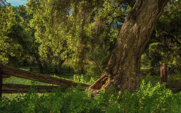 Wall Art - Photograph - Oak And Fence by Joseph Smith