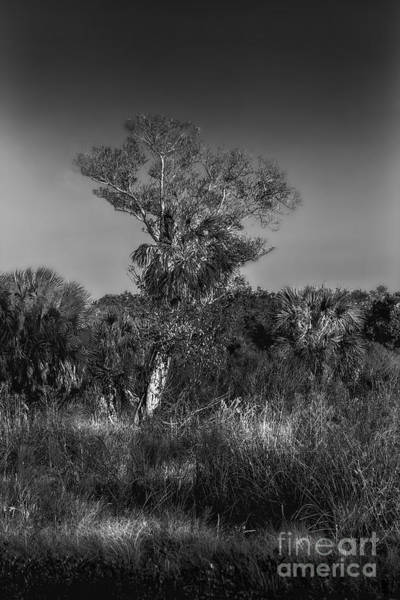 Tin Roof Wall Art - Photograph - Oak And Palm by Marvin Spates