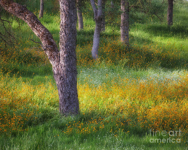Photograph - Oak And Wildflowers 2 by Anthony Bonafede