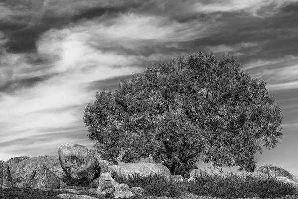 East County Photograph - Oak, Boulders And Clouds by Joseph Smith