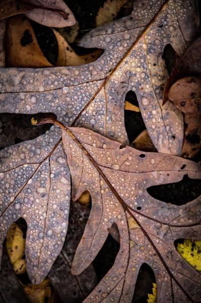Photograph - Oak Floor by Terri Hart-Ellis