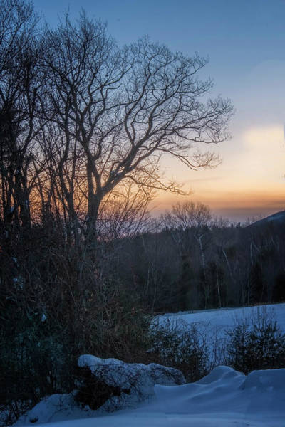Photograph - Oak In Winter by Tom Singleton