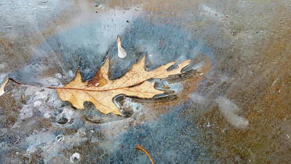 Photograph - Oak Leaf Frozen On Ice by Lynn Hansen