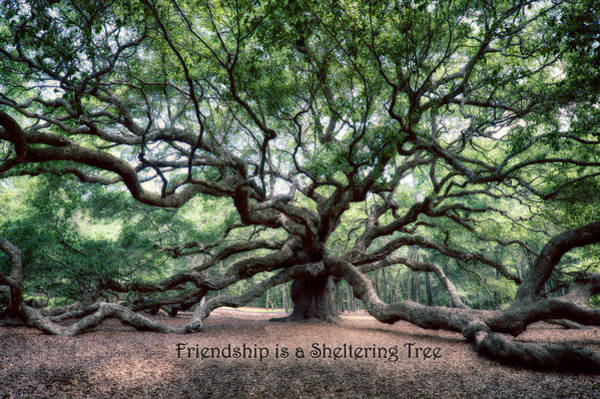 Photograph - Oak Of The Angels - Friendship by Renee Sullivan