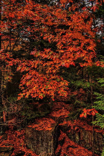 Photograph - Oak On The Rocks by Dale Kauzlaric