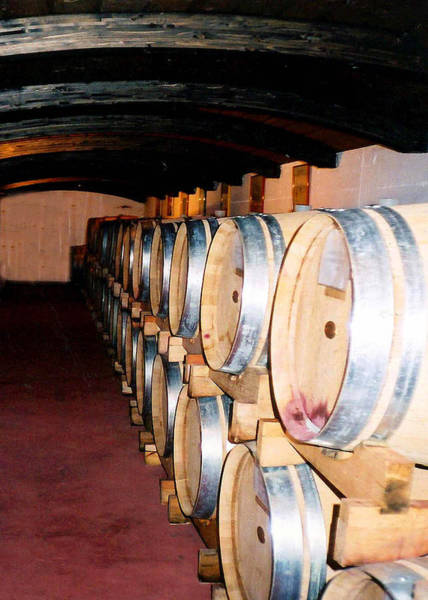 Photograph - Oak Red Wine Barrels by Donna Proctor