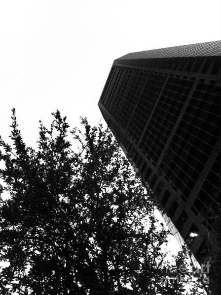 Photograph - Oak Scrapper by WaLdEmAr BoRrErO