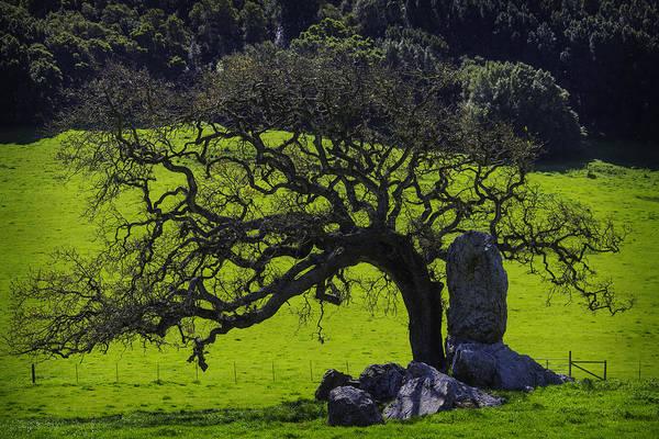 Hillside Photograph - Oak Tree And Rock by Garry Gay