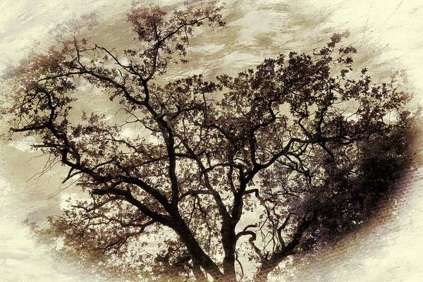 Shower Curtain Digital Art - Oak Tree by Athala Carole Bruckner