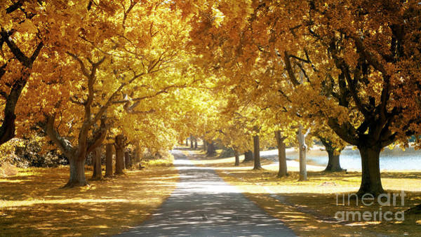 Wall Art - Photograph - Oak Tree Avenue In Autumn by Jane Rix