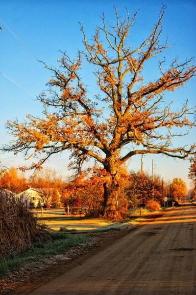 Photograph - 9016 - Oak Tree On Oak Road by Sheryl L Sutter