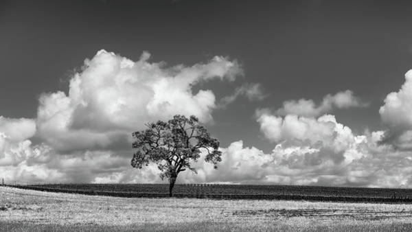 Wall Art - Photograph - Oak With Cloudbank by Joseph Smith