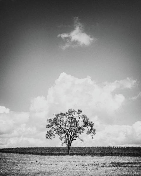 Wall Art - Photograph - Oak With Floating Cloud by Joseph Smith