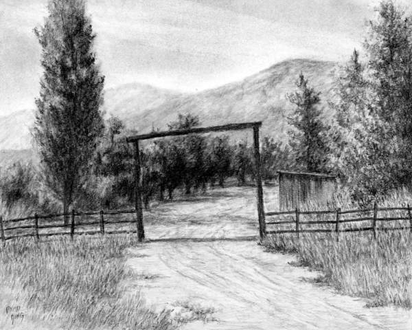 Evergreen Trees Drawing - Oakley Ranch Entrance by David King