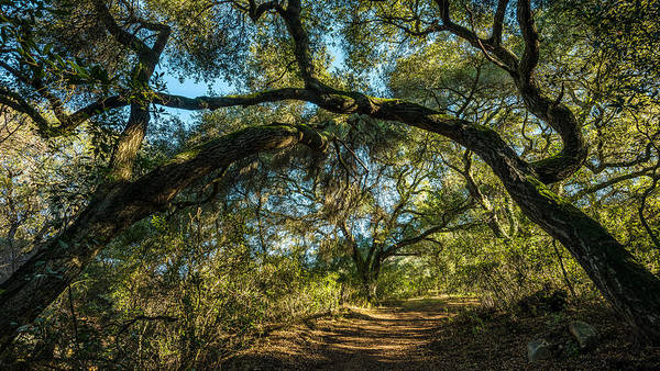Photograph - Oaks Arching Over Trail At Daley Ranch by Alexander Kunz