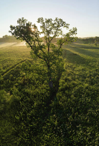Wall Art - Photograph - Oak Tree On Prairie At Sunrise Via Drone by Steve Gadomski