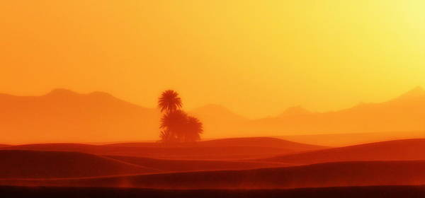 Brillante Photograph - Oasis In The Sahara by HQ Photo