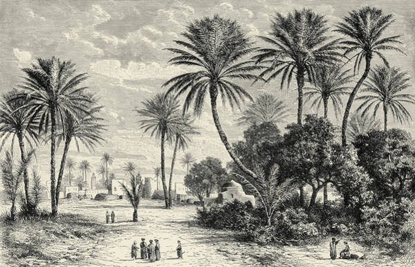 Tunisia Wall Art - Drawing - Oasis Of Gafsa  Tunis by Charles Brabant