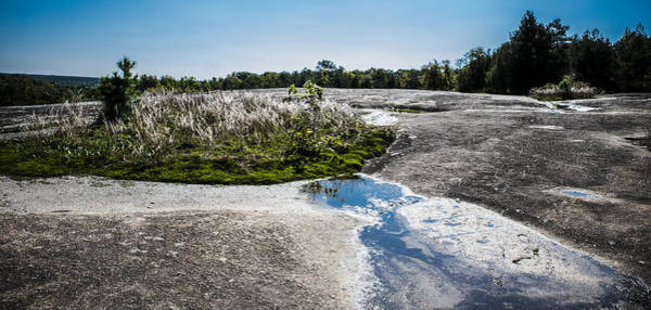 Orpine Photograph - Oasis On The Rock by Alicia Collins