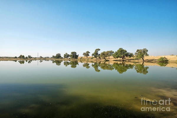 Photograph - Oasis by Yew Kwang
