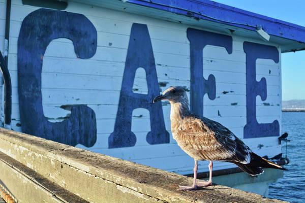 Photograph - Ocean Beach Cafe by Kyle Hanson