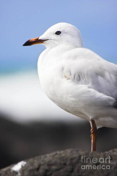 Scavengers Photograph - Ocean Bird by Jorgo Photography - Wall Art Gallery