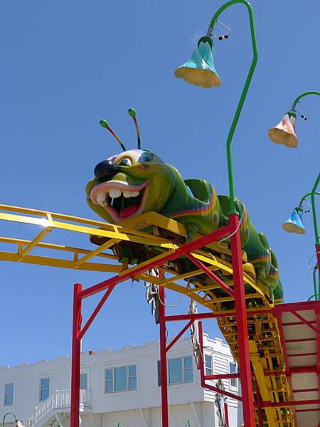 Photograph - Ocean City - Caterpillar by Richard Reeve