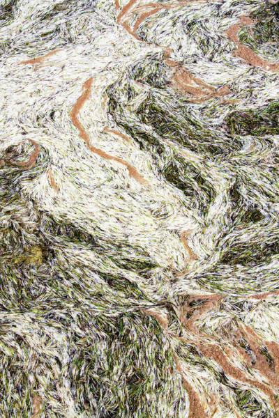 Photograph - Ocean Debris Abstract by Bob Slitzan