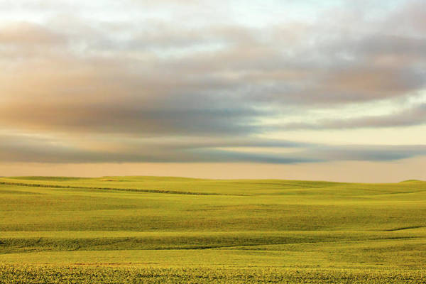 Photograph - Ocean Of Wheat by Todd Klassy