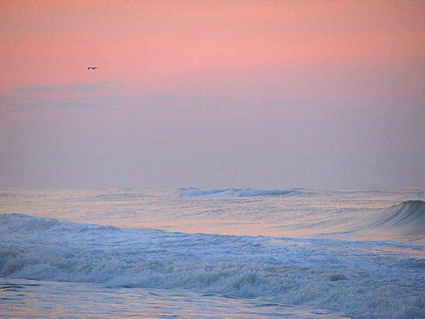 Photograph - Ocean Peace by  Newwwman